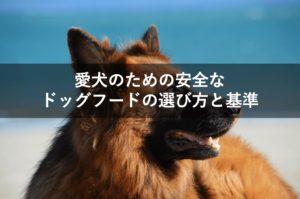 安全なドッグフードの選び方!愛犬に良いドッグフードを選ぶ基準とは?